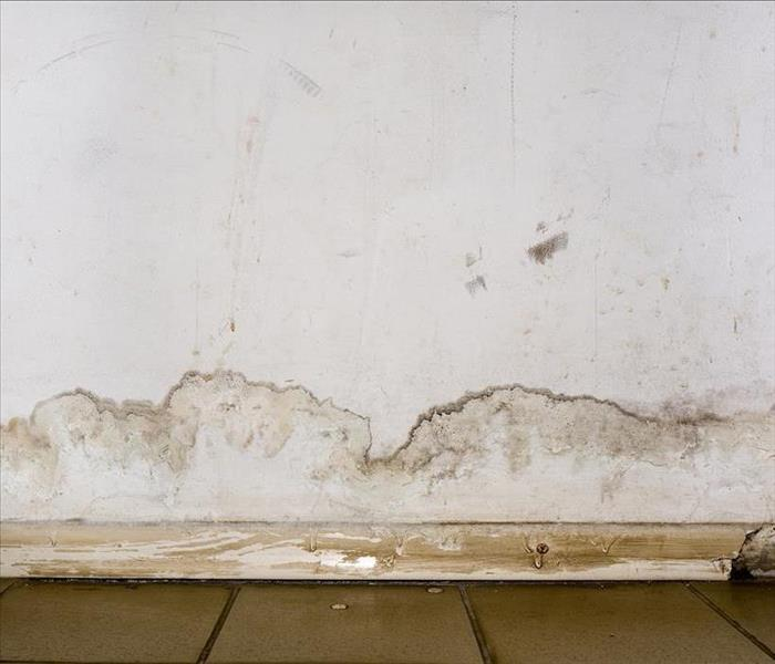 mold growth on walls.